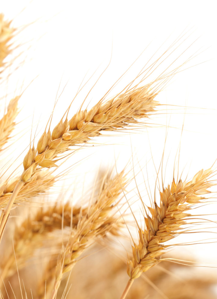 Wheat Allergy 101