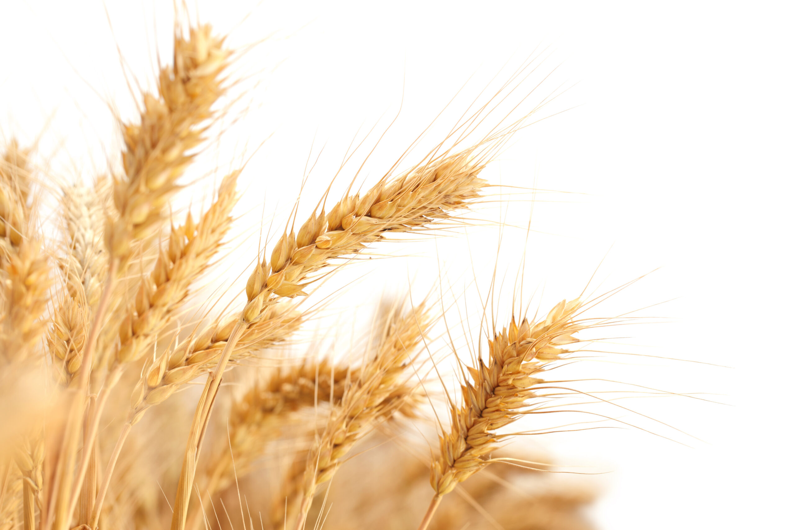Tips for a wheat free diet