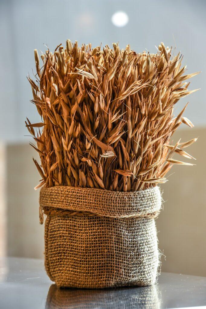 food allergy - wheat